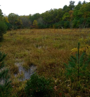One of many old Cranberry bogs at Cranberry Watershed Preserve.