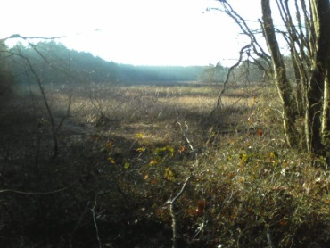 view of bog marsh at crowell conservation