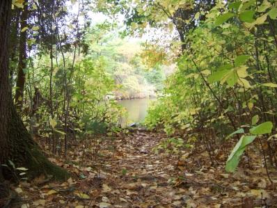 cushing pond from cushing woods in hingham