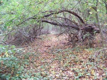 trail leading to private property at cushing woods
