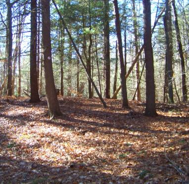 Red arrow side trail loop
