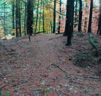 Denham Pond Trail