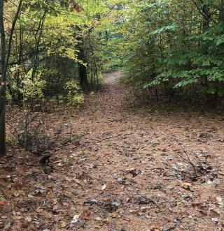 Red blaze trail