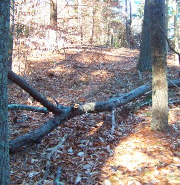 red blazed trail passes over fallen tree