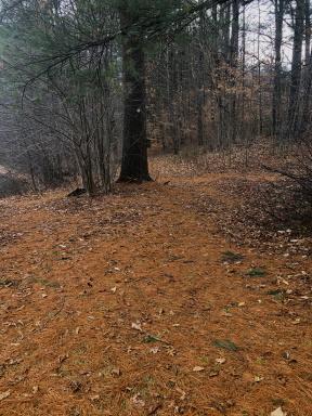Green trail beginning