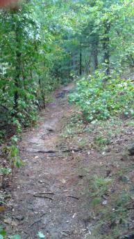 The Bay Circuit Trail runs through Duxbury Bogs below an esker.