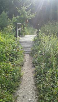 Small bridge between mayflower bog and a pond at duxbury bogs.