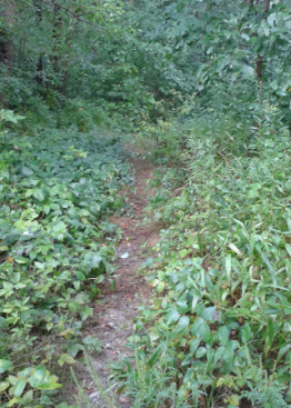 A narrow Bay Circuit Trail leading out of Duxbury Bogs at the lower end of Cranberry Factory Pond.