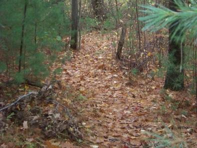 eel river woods hiking trail