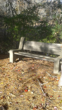 seating along the flaherty trail in whitman