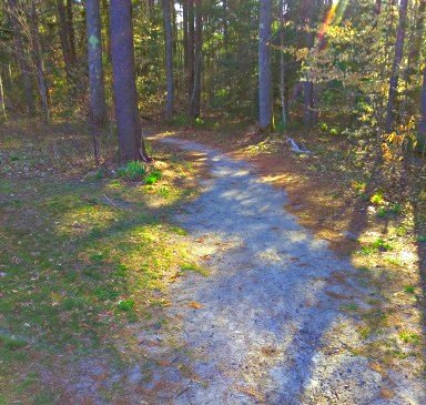 short sandy loop trail into the forest