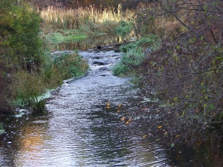 upstream from the bridge over french's stream