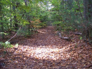 wide path of french's stream trail