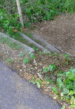 Rustic steps lead down from the sidewalk into the george ingram park in cohasset.