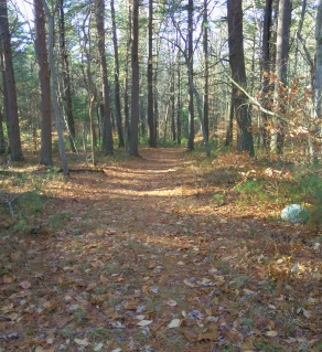 The wide easy cart path beginning at Hanson Town Forest.