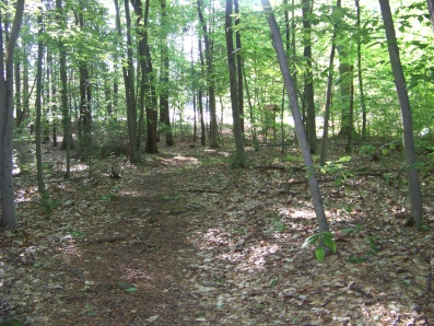 trail leading out to edgewood park in norwell
