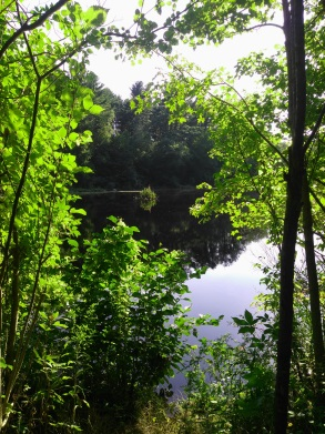 First glimpse of the pond from the Holly Pond Trail.