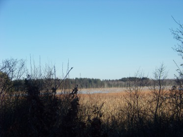great cedar swamp in Hanson