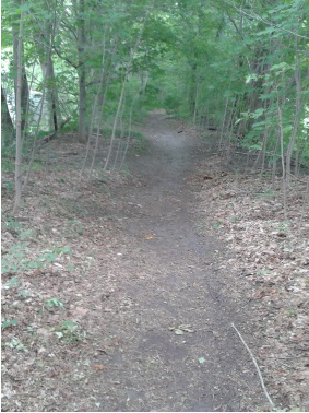 early part of the hiking trail on indian head trail in hanover