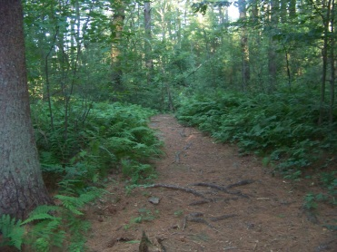 lush trail at jacobs pond conservation area in norwell