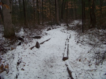 limb lined trail in rockland town forest
