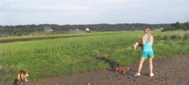 dog walking at Rexhame Beach in Marshfield