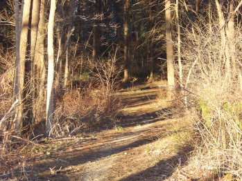 beginning of forest trail at little conservation area