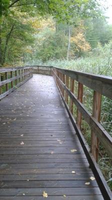 pathway boardwalk passes through marsh grasses