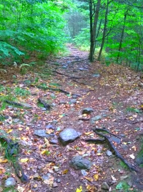 The hiking trail up Mount Hope in Wompatuck State Park becomes rocky.