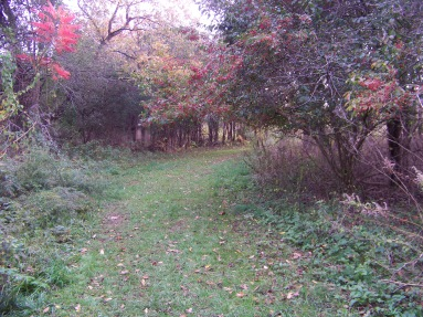 meadow trail in fall at pond meadow park