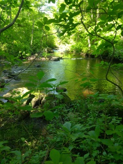 Scenic view of the Drinkwater River on Frenchs Stream Trail.