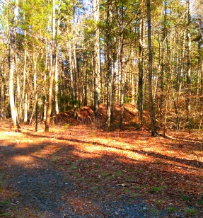 Mounds along the hiking trail that resemble the underground bunkers found at Wompatuck State Park