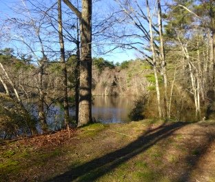 Beautiful view of Sawmill Pond and a great fishing spot!