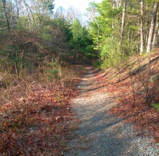 Gravel hiking trail leading gently downhill.