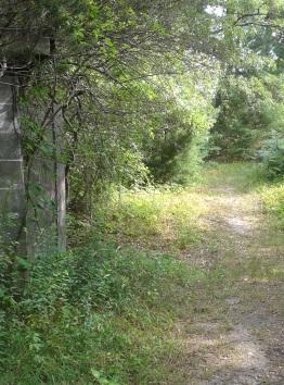 Hiking trail around old bog at silver lake sanctuary.