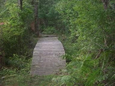 boardwalk on salt marsh trail at stetson meadows in norwell