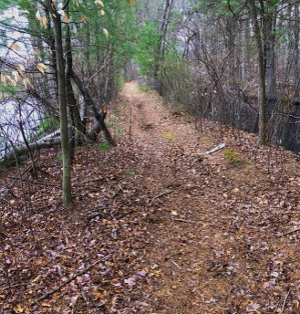 Hiking trail runs between pond and tributary