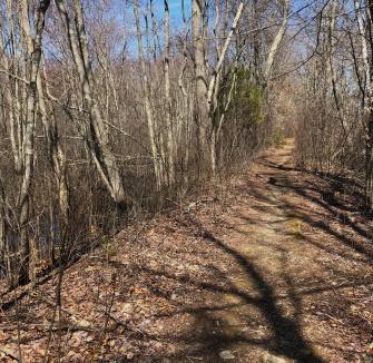 Northern trail along stump brook.