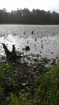 golden reservoir better known as sunken forest in duxbury.