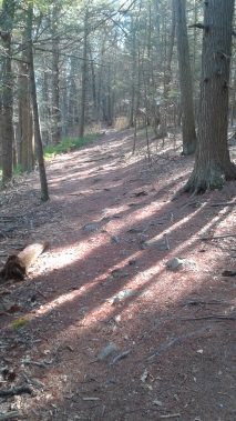 easy to navigate upper ground trail in tucker preserve