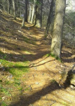 narrow trail on three town loop