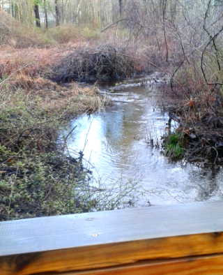 View from one of many bridges at Rockland Town Forest hiking trails.