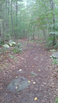 wide easy hiking trail at tucker preserve