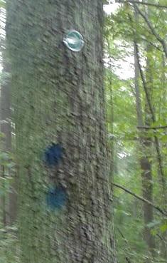 trail marking in tucker preserve