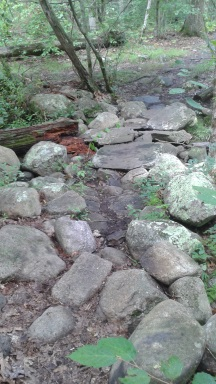 stone step way over a stream at tucker preserve