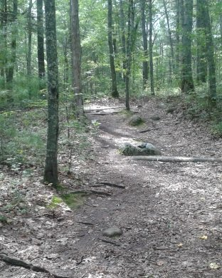 the trail up into the uphill portion of tucker preserve