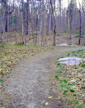 The trail up turkey hill starts as a wide, winding gravel lane.
