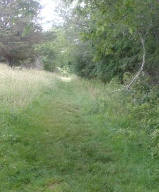A trail cut through grass on Turkey Hill