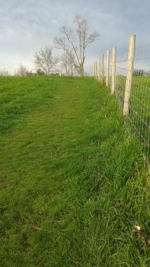 Turkey Hill uphill meadow trail