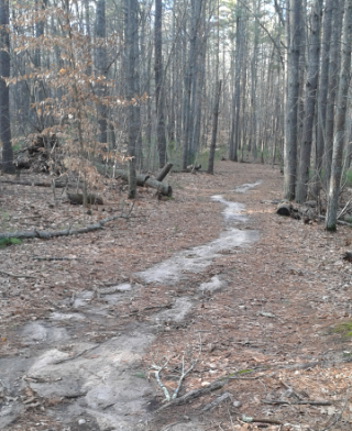 sandy hiking trail leading to Carreira Woods at Two Mile Farm